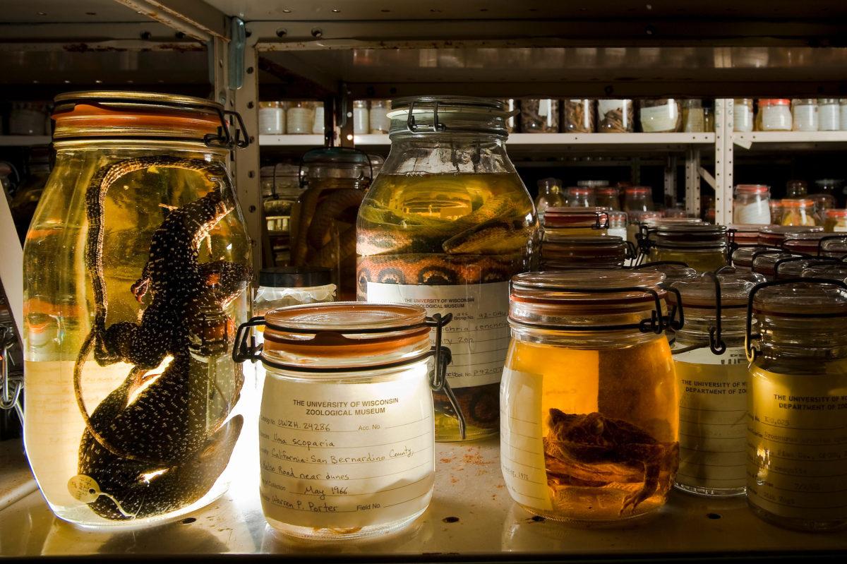 museum jars