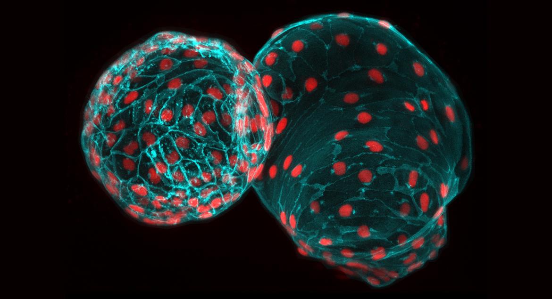 zebrafish particles green